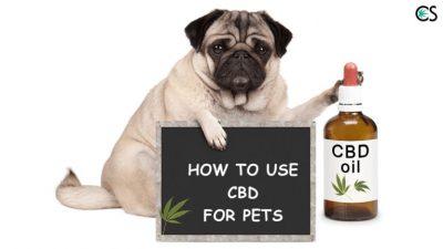 dog CBD dose